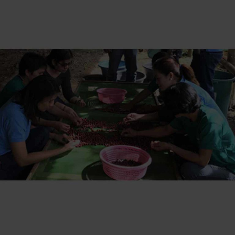 Baslay Coffee: Brewing a Better Life for Kaingeros
